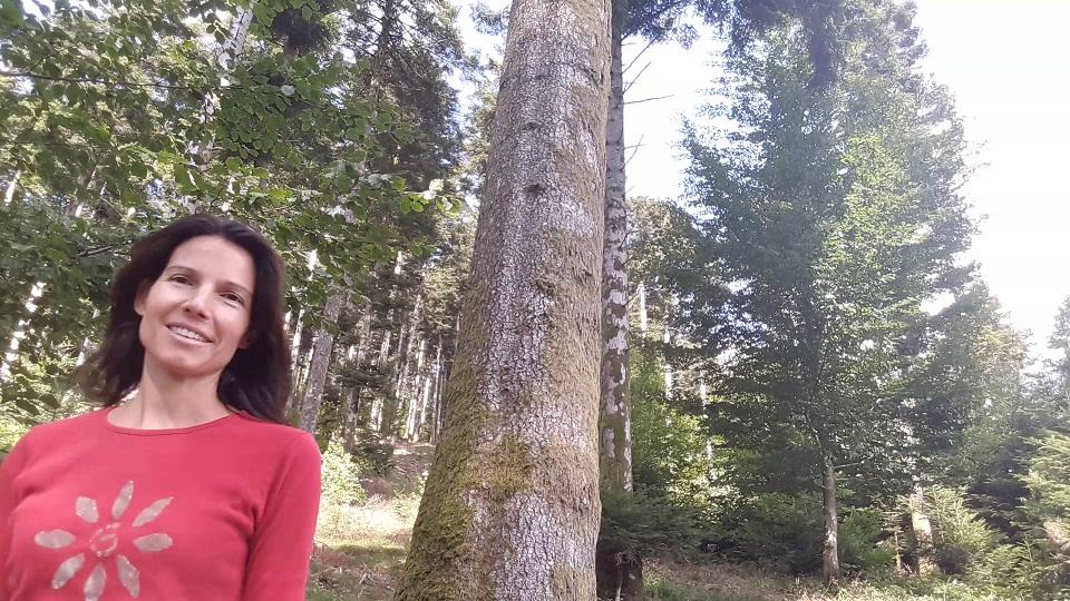 J'ai testé le forest bathing – bain de forêt – Shinrin Yoku